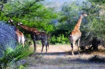 Turismo Sud Africa,