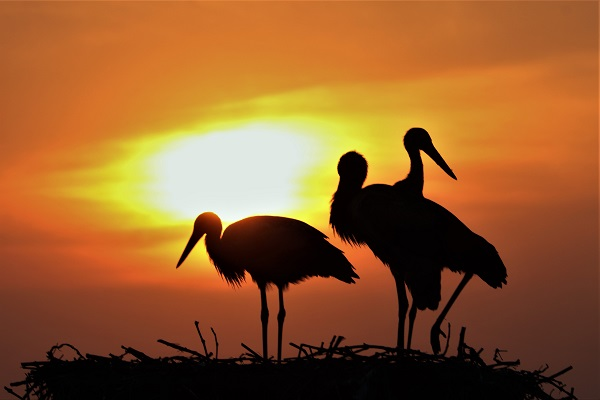 cicogne al tramonto2