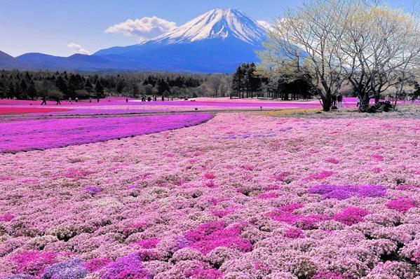 Giappone, un viaggio... in pellicola!